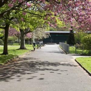 Blossom walk