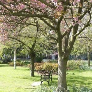 Blossom bench